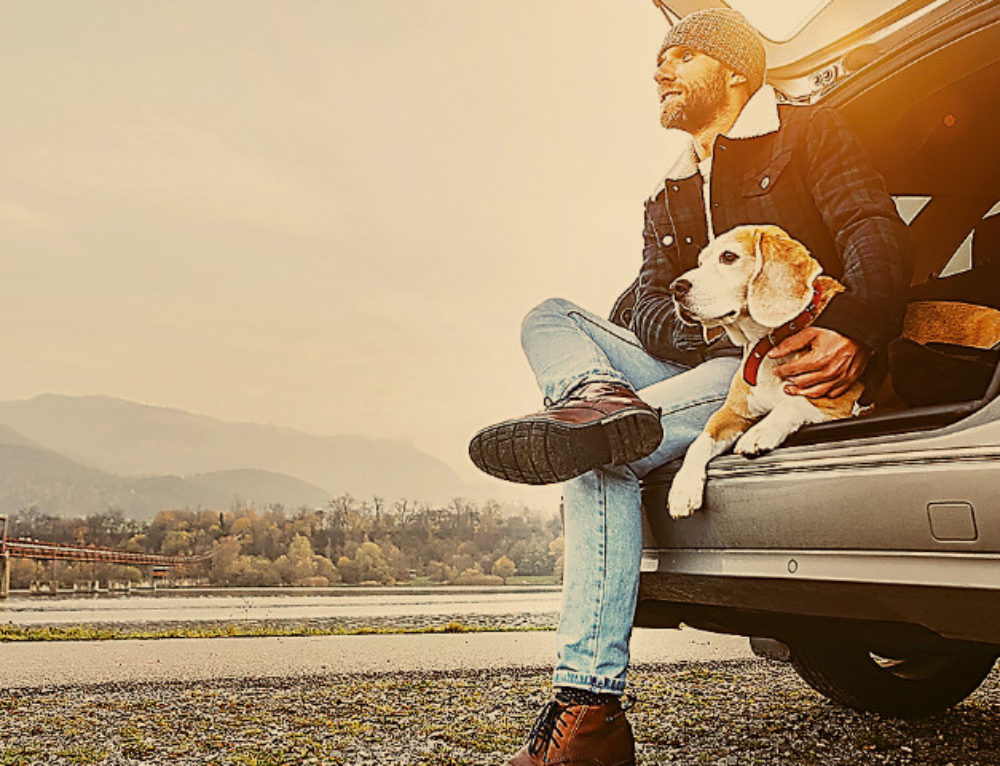 Paws on Board: Pet owners are taking more care to plan for pets' safety when they take them along for a ride.